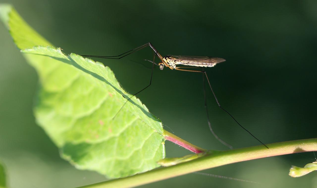 Rośliny odstraszające komary Rośliny odstraszające komary